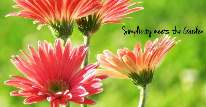 simplicity meets the garden